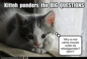 Kitteh  ponders  the  BIG  QUESTIONS