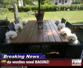 Breaking News - da westies need BACUNZ!