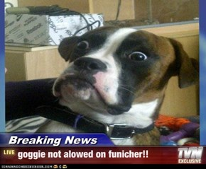 Breaking News - goggie not alowed on funicher!!