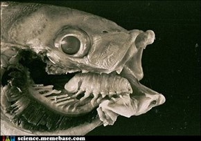 Cymothoa Exigua Got Your Tongue?