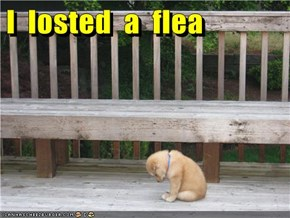I  losted  a  flea