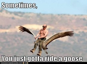 Sometimes,  You just gotta ride a goose