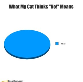 "What My Cat Thinks ""No!"" Means"