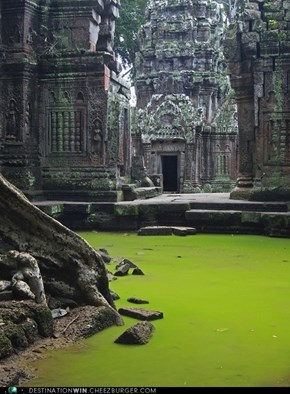 At the Ta Prohm Temple, Cambodia