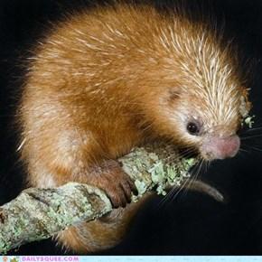 Whatsit: Prickly Squirrel