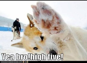 Yea bro!high five!