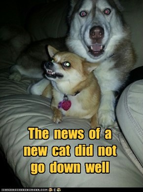 The  news  of  a   new  cat  did  not   go  down  well