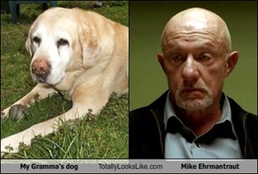 My Gramma's dog Totally Looks Like Mike Ehrmantraut