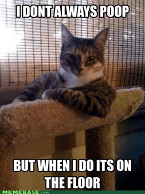 Thx Cat