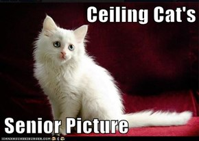 Ceiling Cat's  Senior Picture