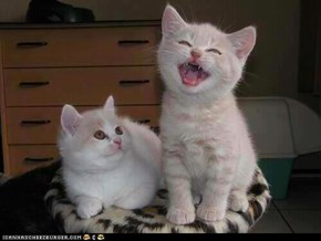 Cyoot Kittehs of teh Day: Uh Oh, Here Come the High Notes...