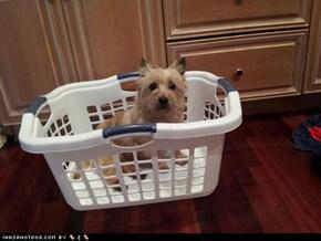Denny in Basket