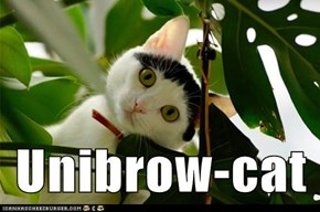 Unibrow-cat