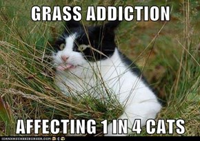 GRASS ADDICTION   AFFECTING 1 IN 4 CATS