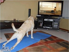 Doggy Yoga WIN