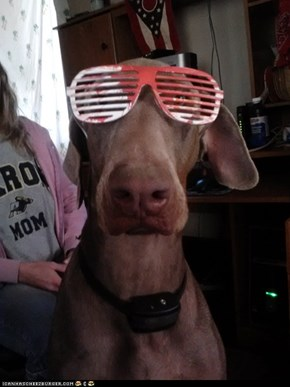 Hipster Doberman