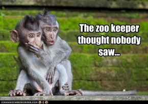 The zoo keeper thought nobody saw...