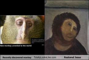 Recently discovered monkey Totally Looks Like Restored Jesus