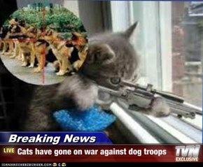 Breaking News - Cats have gone on war against dog troops