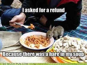 Something bunny happened