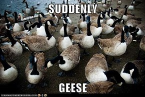 SUDDENLY  GEESE