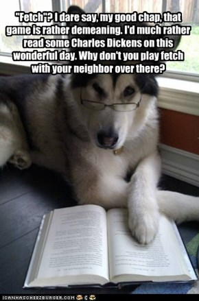 Doggie is smarter than you think