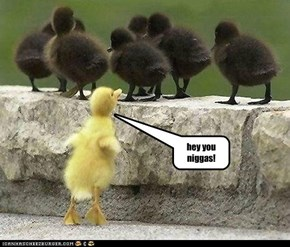 racist duckling
