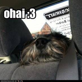 ohai :3