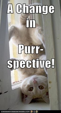 A Change in Purr-spective!