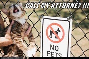 CALL MY ATTORNEY !!!
