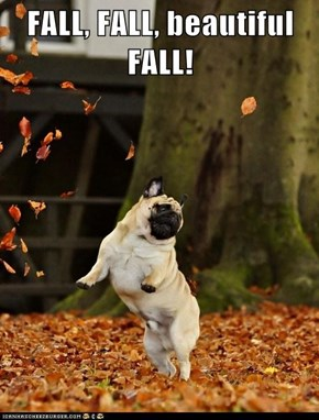 FALL, FALL, beautiful FALL!