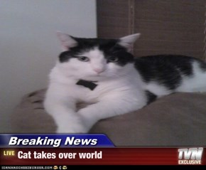 Breaking News - Cat takes over world