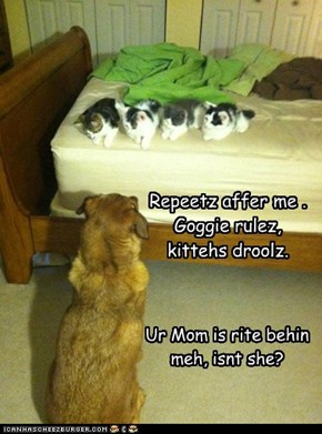 Repeetz affer me . Goggie rulez, kittehs droolz.
