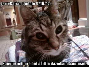 JerryGarcia Update 9/16/12:  Hangin' in there but a little dazed and confused.