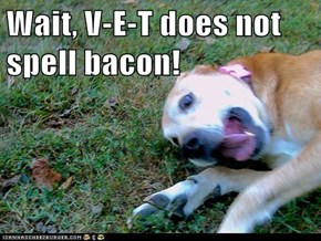Wait, V-E-T does not spell bacon!