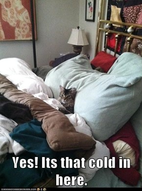 Yes! Its that cold in here.