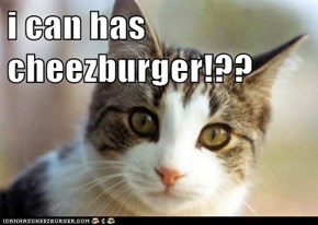 i can has cheezburger!??