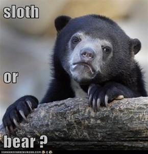 sloth or bear ?