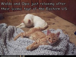 Waldo and Opie just relaxing after their scenic tour of the Eastern US.