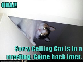 OHAI!   Sorry Ceiling Cat is in a meeting. Come back later.