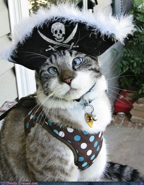 Yo Ho Yo Ho, A Pirate's Life for Meow
