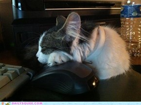 Reader Squee: Mouse is Comfy