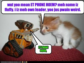 wut yoo mean ET PHONE HOEM? meh name iz fluffy. i iz meh own leader, yoo jus pwain weird.