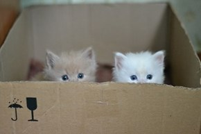 Cyoot Kittehs of teh Day: We'll Grow Into This Box
