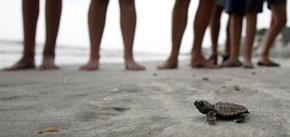 Big World, Tiny Turtle