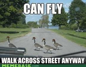 Scumbag Geese