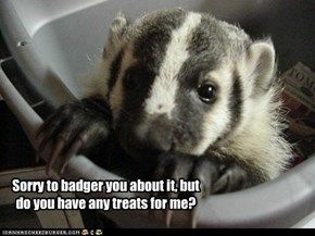 Sorry to badger you about it, but do you have any treats for me?