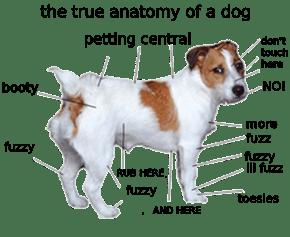 True Dog Anatomy
