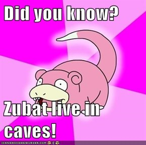 Did you know?  Zubat live in caves!