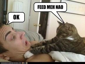 FEED MEH NAO